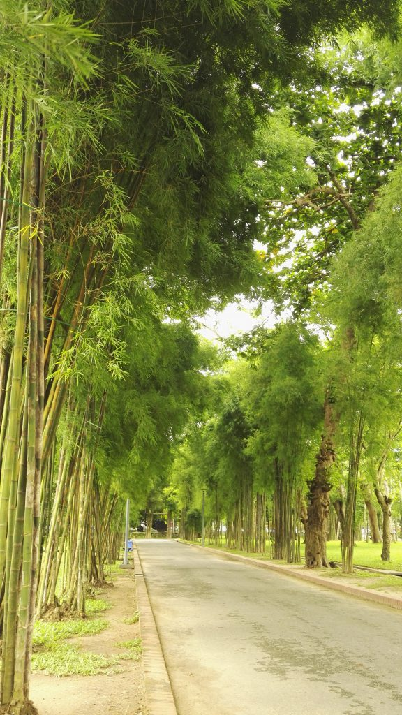 A beautiful bamboo walkway